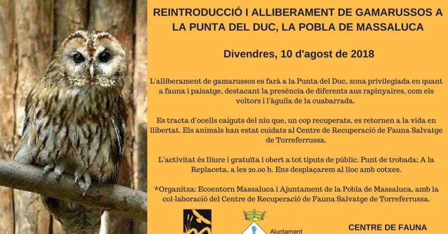 Reintroducció i alliberament de gamarussos a la Punta del Duc