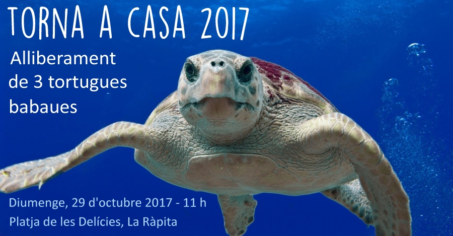 Torna a Casa 2017. Alliberament de 3 tortugues marines