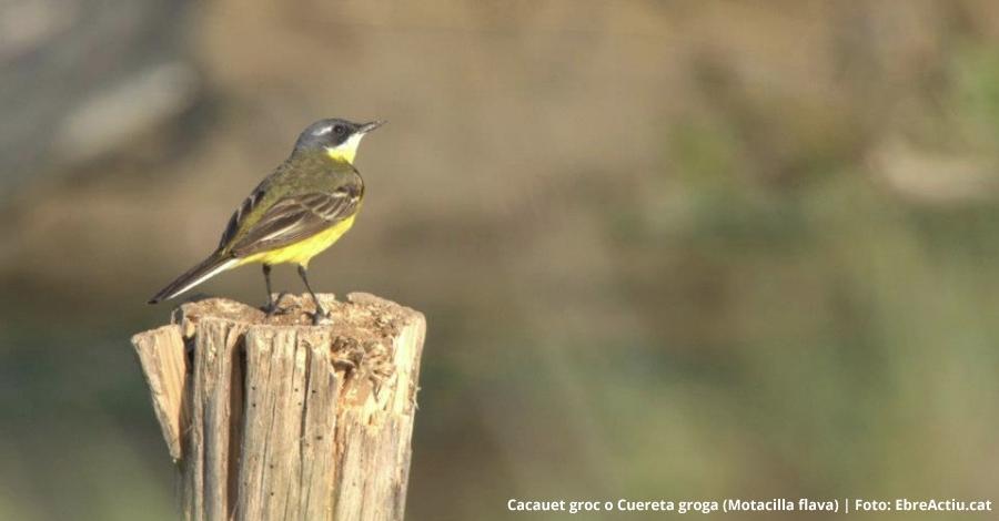 Es publica el primer Anuari Ornitològic del delta