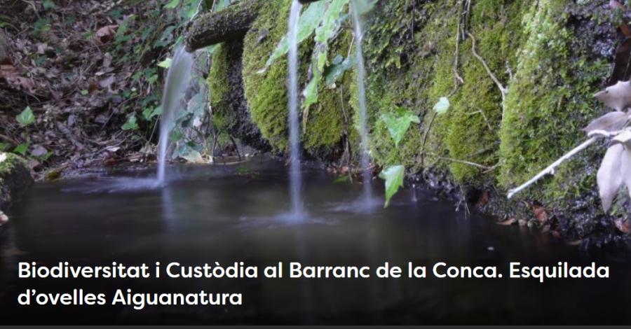 Setmana de la Natura. Biodiversitat i Custòdia al Barranc de la Conca. Esquilada d'ovelles Aiguanatura