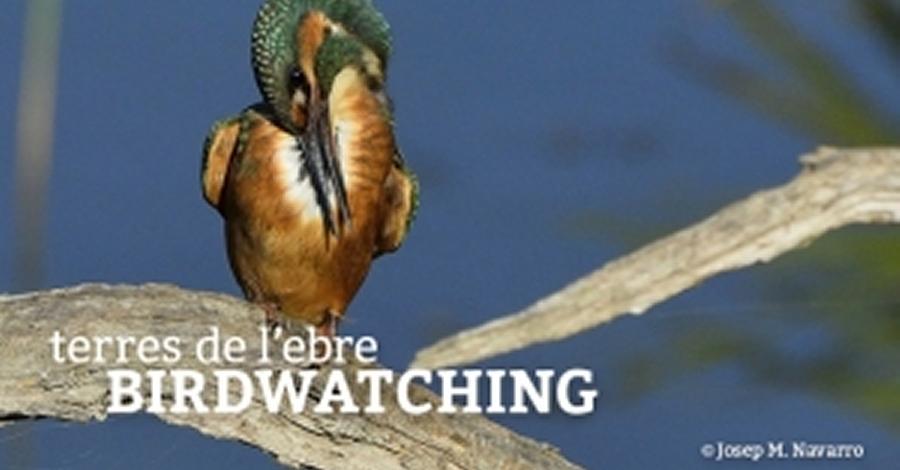Publicada l'edició agost 2015 del Birdwatching Terres de l'Ebre