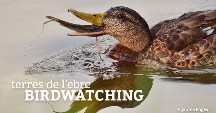 Butlletí Birdwatching Terres de l'Ebre - agost 2017