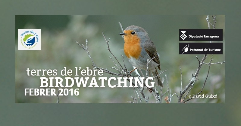 Butlletí Birdwatching Terres de l'Ebre - febrer 2016