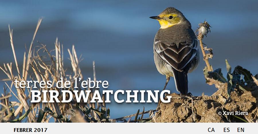 Publicada l'edició febrer 2017 del Birdwatching Terres de l'Ebre