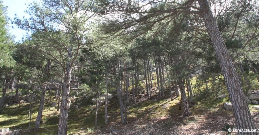 Un projecte de la Fundació Catalunya-La Pedrera protegeix els boscos catalans més fràgils