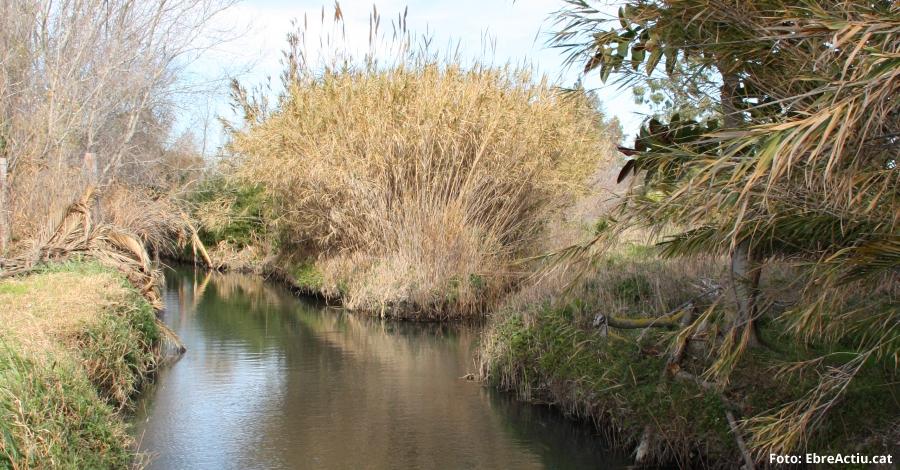 Natura   2 de febrer, Dia Mundial de les Zones Humides