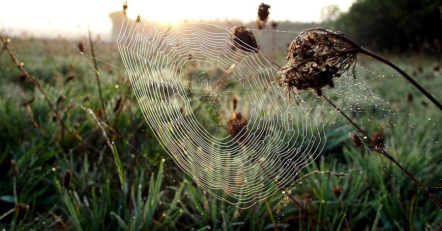 """Conferència """"Devora-mascles i transvestits. La vida sexual secreta d'aranyes i insectes"""""""