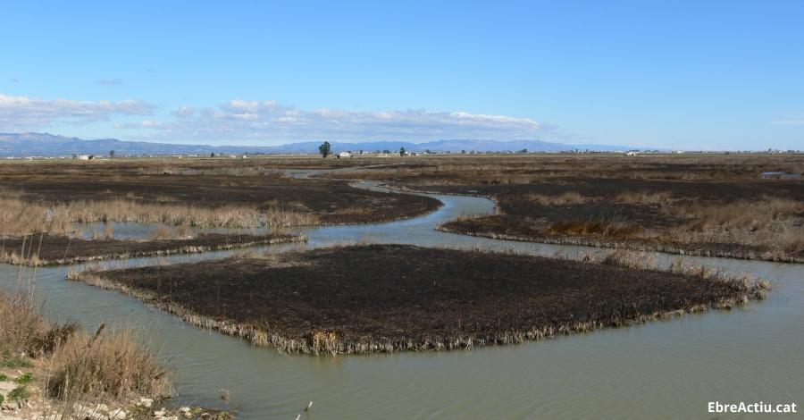 Crema controlada per reduir biomassa al Parc Natural del Delta de l´Ebre