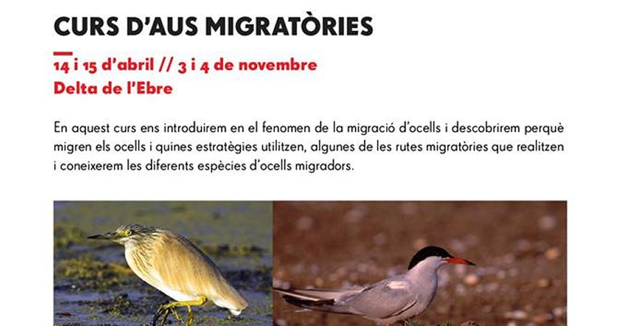 Curs d'aus migratòries