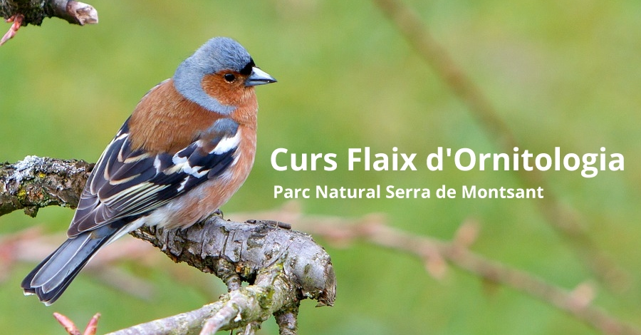 Curs Flaix d'Ornitologia