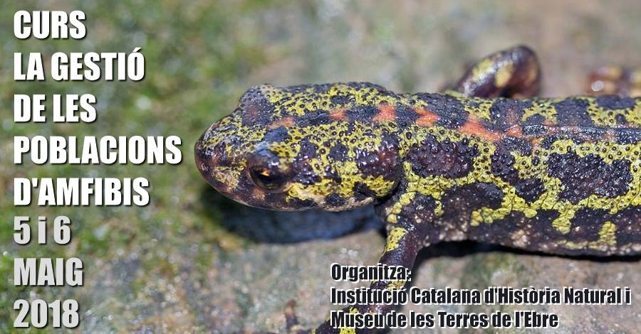 Curs «La gestió de les poblacions d'amfibis»