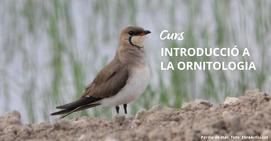 Curs: Introducció a l'ornitologia