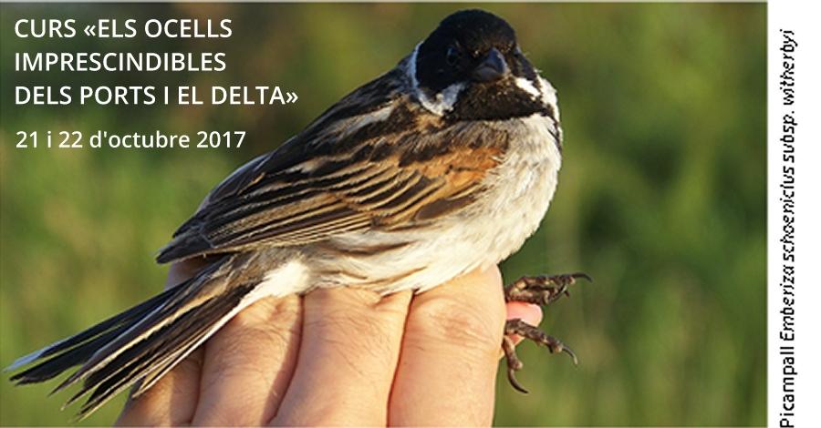 Curs: Els ocells imprescindibles dels Ports i el Delta