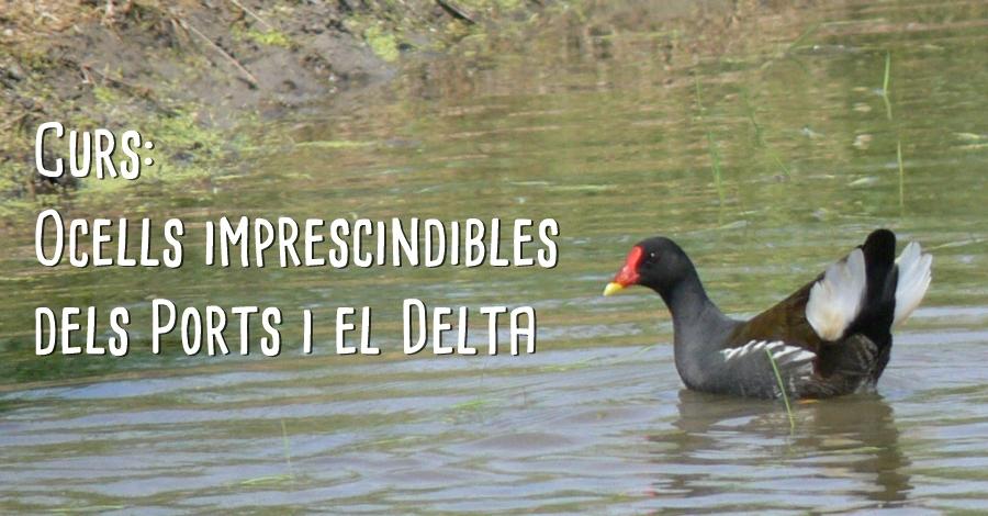 """Curs """"Ocells imprescindibles dels Ports i el Delta"""""""