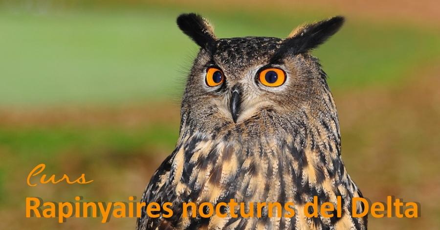 """Curs """"Els rapinyaires del Parc Natural del Delta i Els Ports"""""""