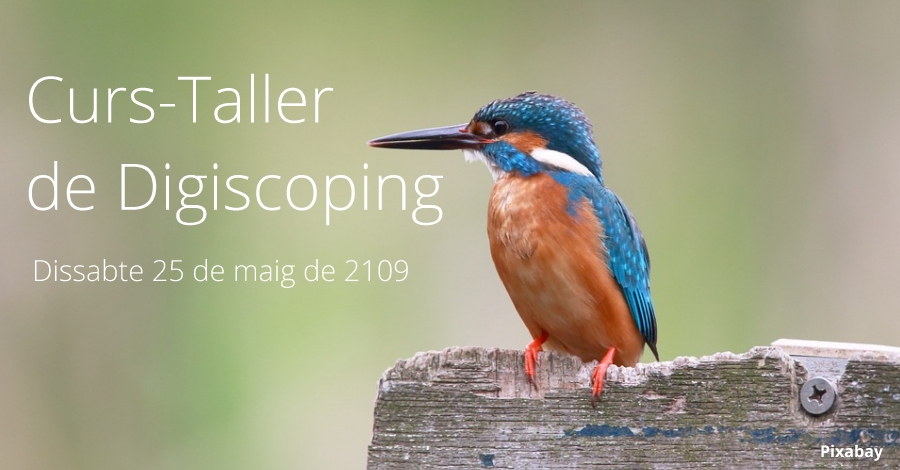 Curso-Taller de Digiscoping