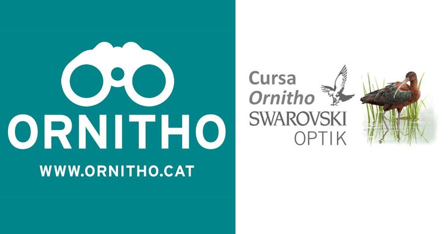 Un any més torna la cursa Ornitho-Swarovski