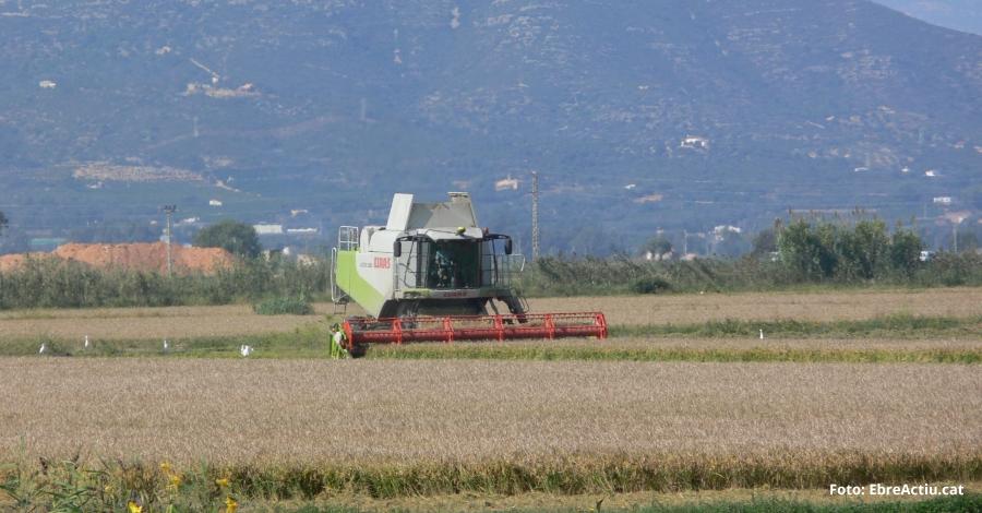 Prop de 2.500 ha d'arròs afectades per la tempesta d'aquest dimarts al Montsià