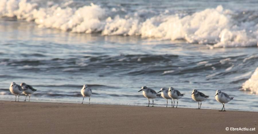 Delimitació de les àrees de nidificació d´ocells marins al Parc Natural del Delta de l´Ebre