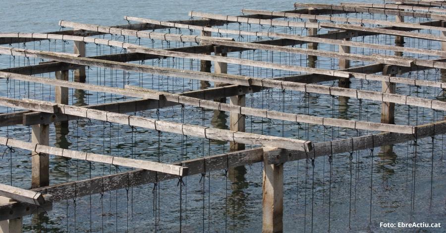El sector aqüícola reclama mesures per compensar les pèrdues econòmiques provocades per la mort del musclo