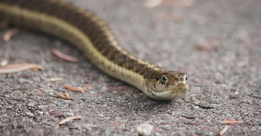 Descoberta dels rèptils i amfibis del Parc Natural de la Serra de Montsant