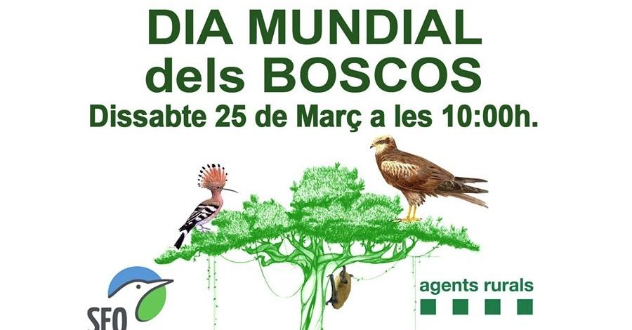 Celebració del Dia Mundial dels Boscos