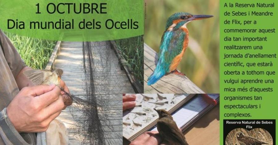 Dia Mundial dels Ocells. Jornada d'anellament científic d'ocells