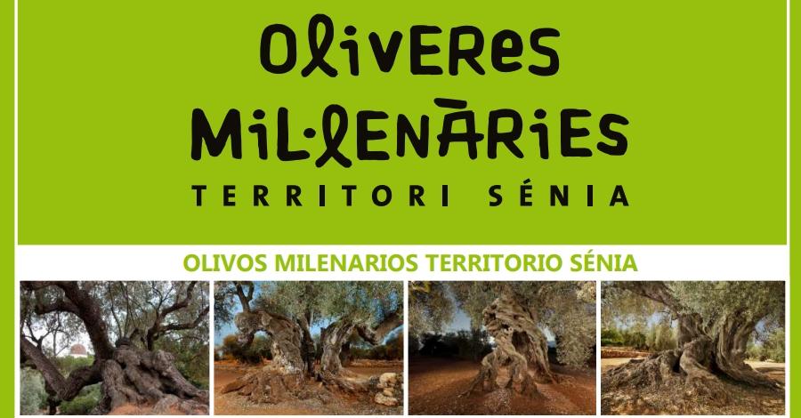 Editen un opuscle per facilitar la visita a les oliveres mil·lenàries del Territori Sénia