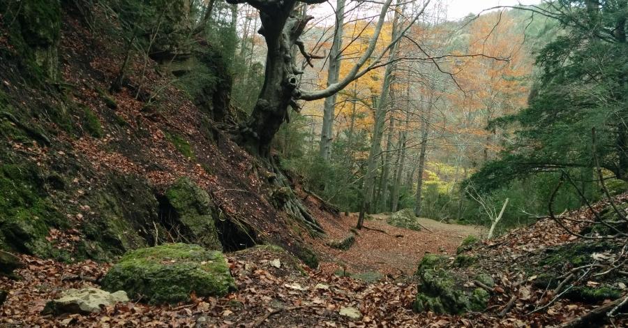 Els Ports, nova Destinació de Natura i Muntanya en Família