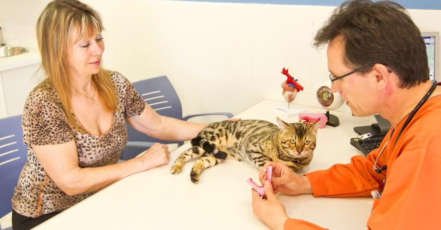 Nexo Veterinaris, la salut de la teua mascota en bones mans