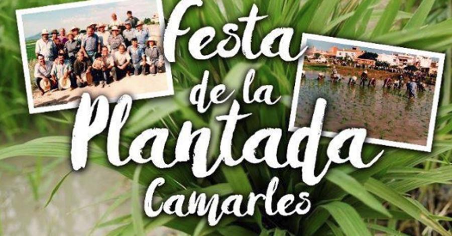 XI Festa de la Plantada a Camarles