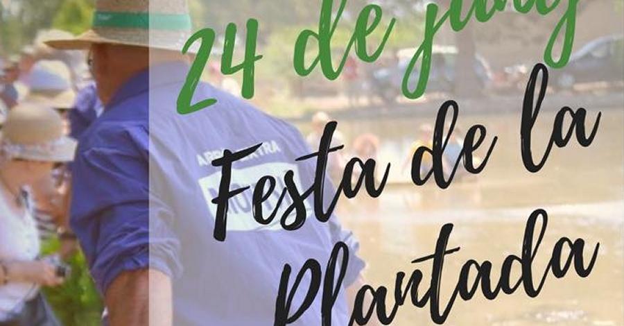 Festa de la Plantada a Sant Jaume d'Enveja