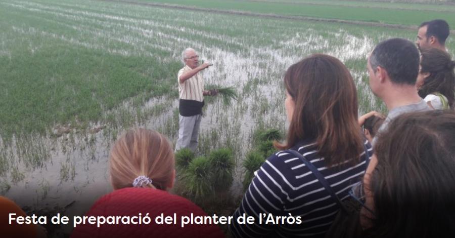 Setmana de la Natura: Festa de preparació del planter de l'arròs