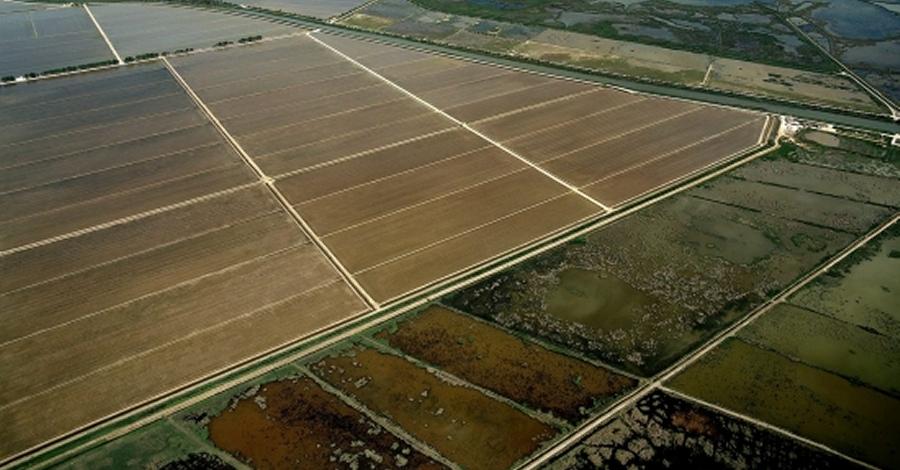 La finca del Violí, al delta de l'Ebre, comptarà amb un observatori ornitològic i itineraris per gaudir de les aus i del paisatge