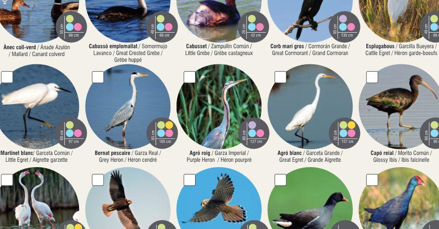 «Troba'l i marca'l» per a localitzar plantes, mol·luscs i ocells al delta de l'Ebre