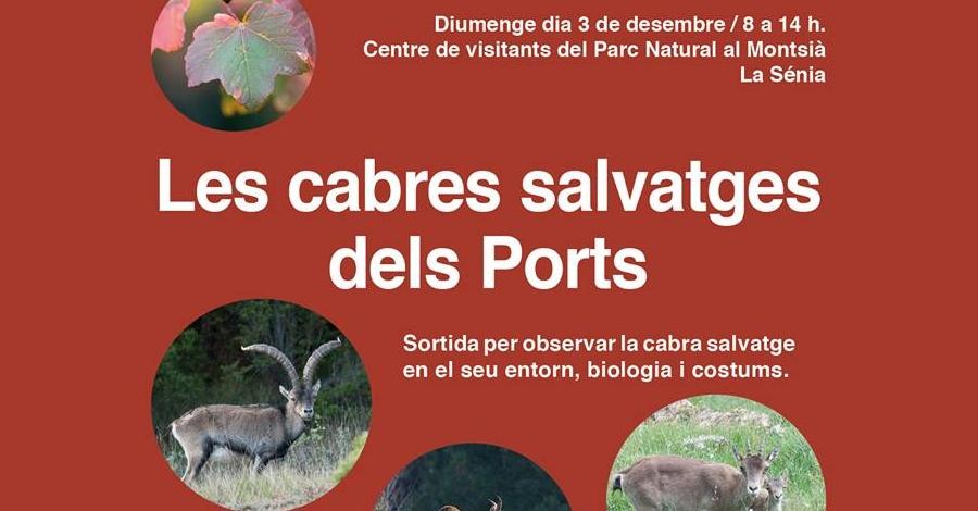 Les cabres salvatges dels Ports