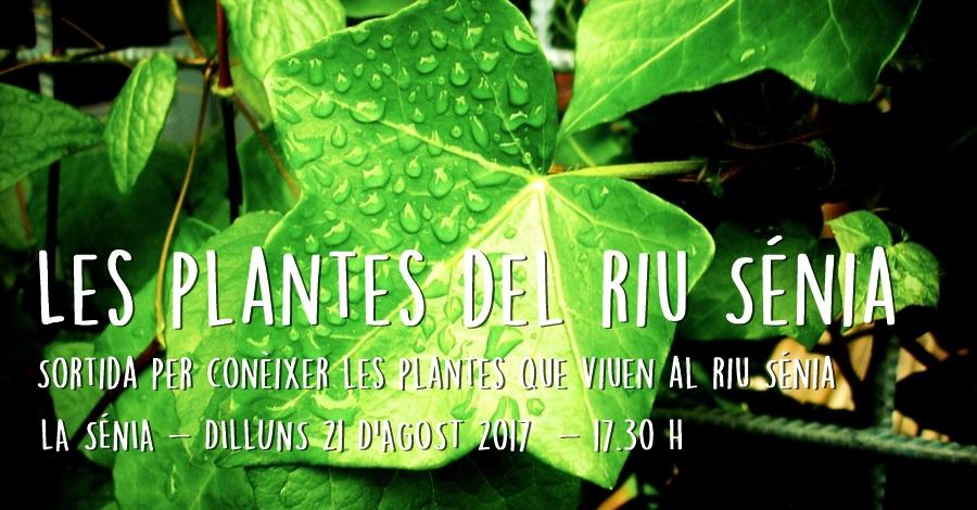 Les plantes del riu Sénia: sortida per conèixer les plantes que viuen al riu Sénia