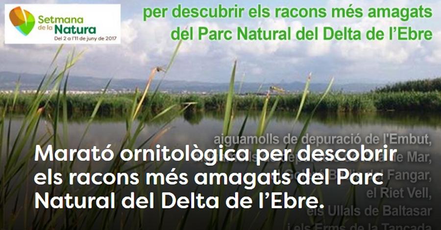 Marató ornitològica per descobrir els racons més amagats del Parc Natural del Delta de l'Ebre