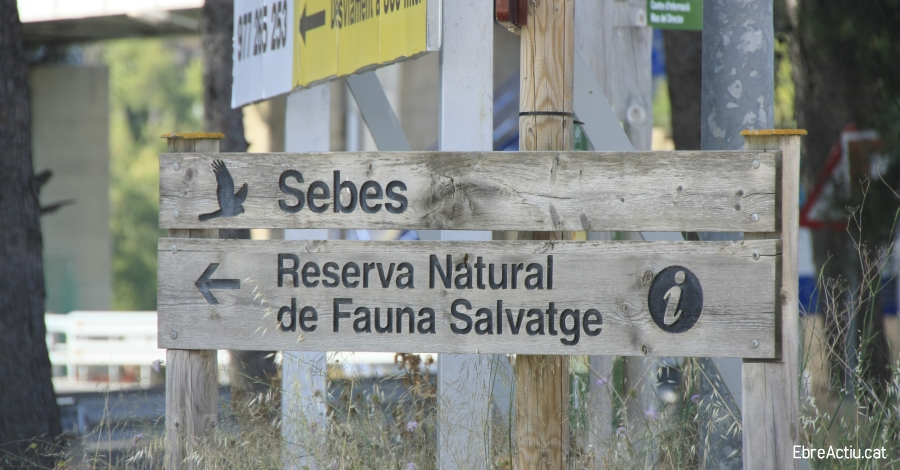 La Reserva Natural de Sebes treballa amb la reintroducció de la cigonya blanca a les Terres de l'Ebre