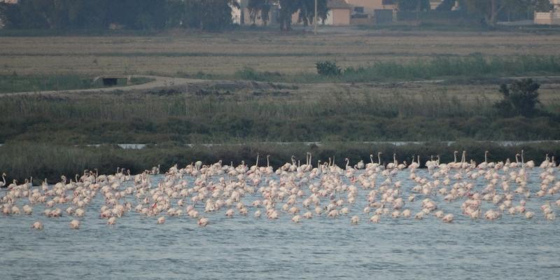 La tercera edició del Delta Birding Festival ja té data