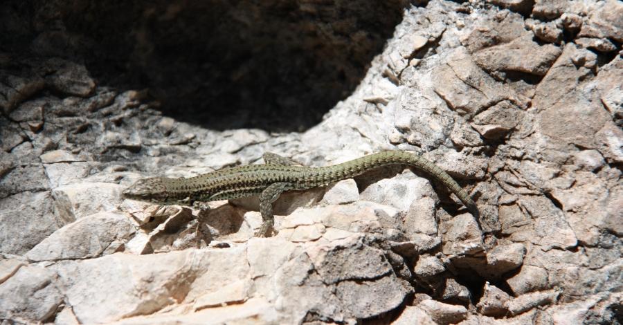 Conéixer la fauna amb finalitats ecoturístiques