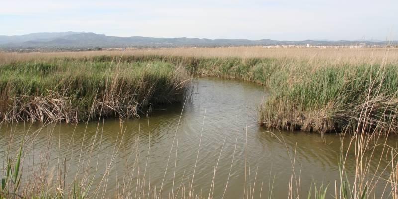 La Generalitat impulsa mesures per minimitzar els riscos associats a la pèrdua de superfície i a la salinització del Delta