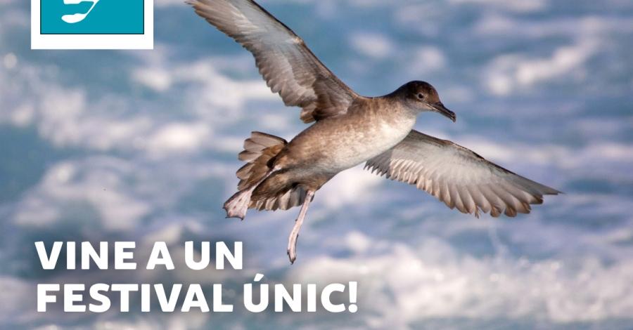 Avui comença la 4a edició del Delta Birding Festival