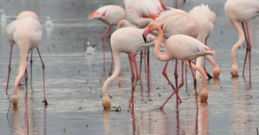 Els parcs naturals celebren el Dia Mundial dels Ocells aquest cap de setmana