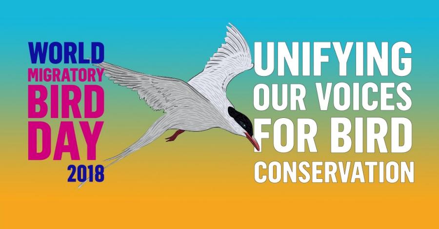 Dia Mundial de las Aves Migratirias, 10 de mayo de 2018