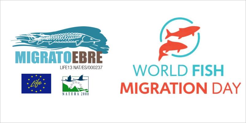 El Parc Natural del Delta de l'Ebre programa diferents activitats per a celebrar del Dia mundial del peix viatger