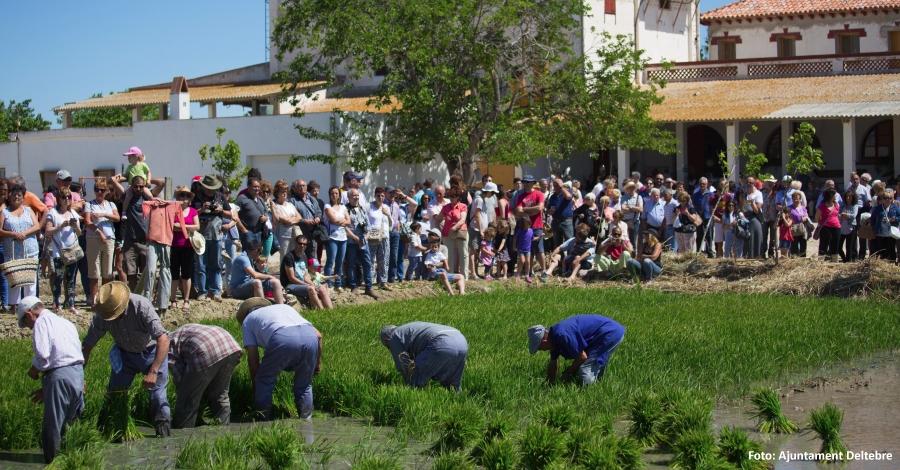Deltebre celebra les Festes de l'Arròs consolidant el model d'èxit de l'any anterior