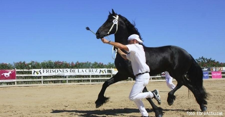 El Campionat Nacional de Cavalls Frisons aplega més de 1.500 persones de públic