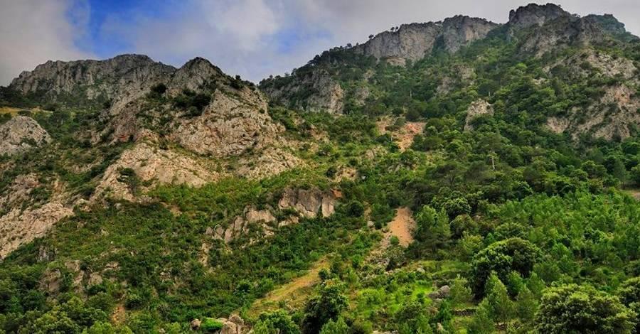 Rasquera acollirà la cloenda del projecte Life Taxus amb una jornada de natura i desenvolupament local