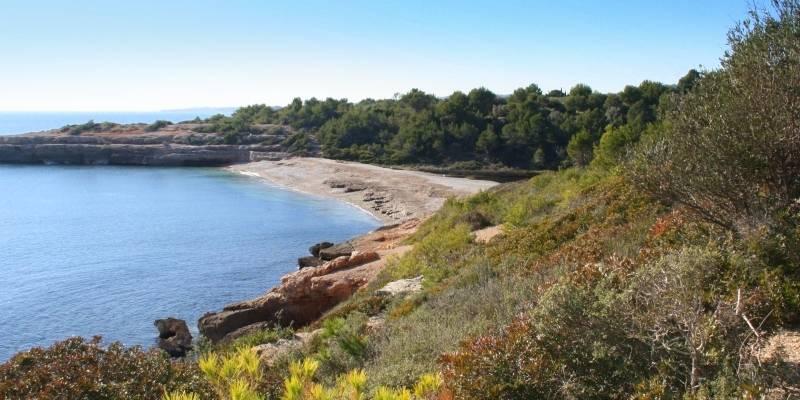 La informació actualitzada sobre l'estat de les platges, disponible a l'aplicació PlatgesCat